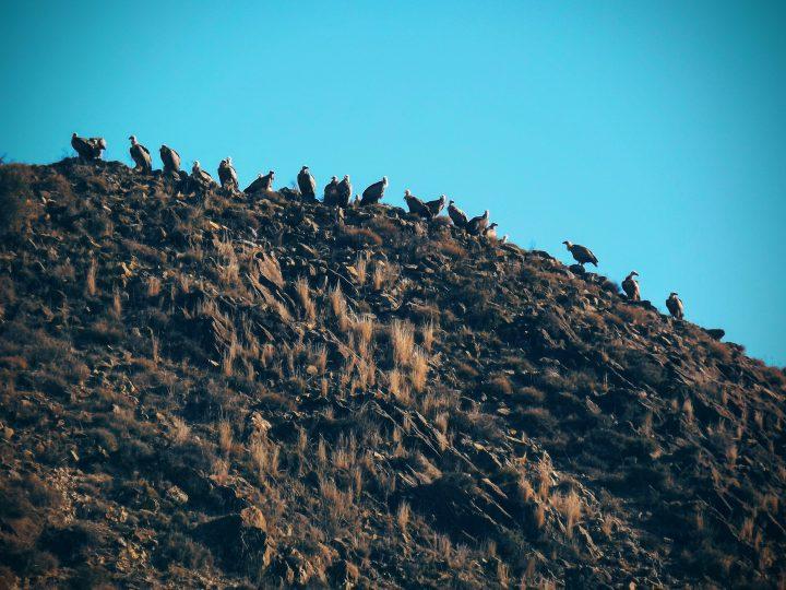 El vuelo del buitre: descubre el entorno natural de la Comunidad de Calatayud